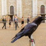 HDI Gerling at the Tower of London for by emma bailey brighton event photographer